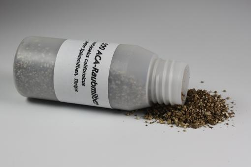 Amblyseius californicus 500 Stück