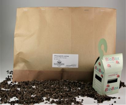 Florfliegen-Larven auf BW 1.000Stck. + 15 BioBoxen