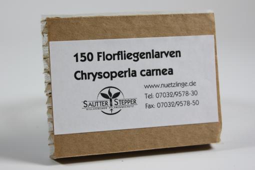 Florfliegenlarven gegen Blattläuse u.a. 150 Stück