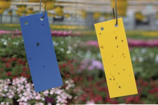 Blautafeln/Gelbtafeln je 10 Stück (5x12 cm)